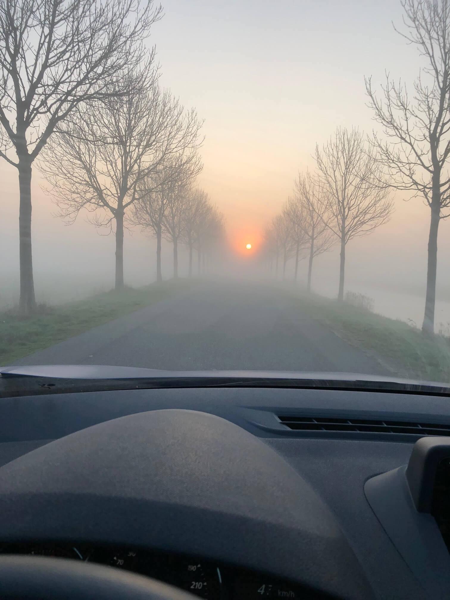 Friesland mist