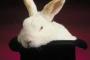 hoge hoed en het konijn